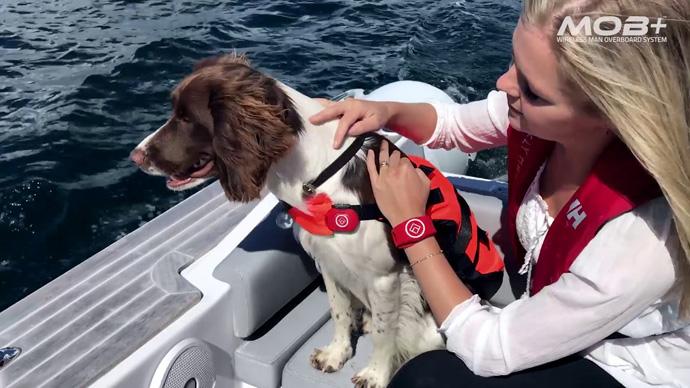 Fell Marine wireless lanyard on a dog