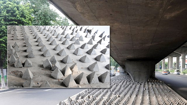 Homeless spikes under a bridge in China. Image courtesy Daily Mail